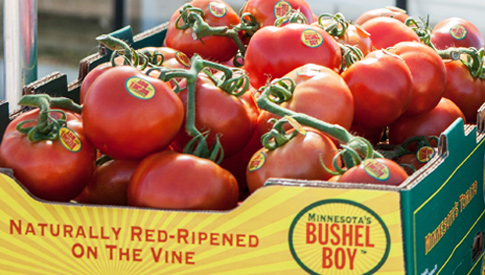 Bushel Boy - Vine Ripened